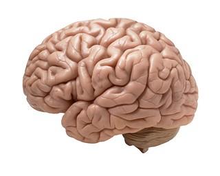 brain-white background